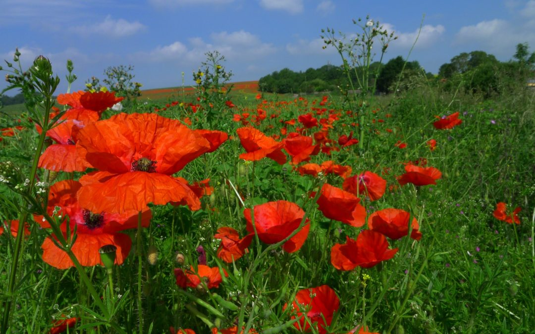 Are you a Tall Poppy?